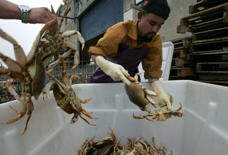 Martin Gonzalez separates freshly caught Dungeness Crabs on Fisherman's Wharf November 28, 2005 in San Francisco, California.