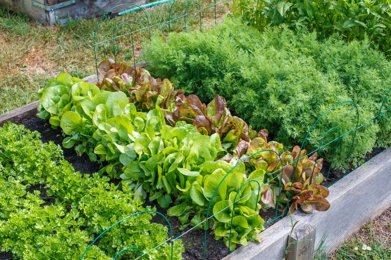 New Pilot Gardening Program To Provide Fresh Produce To South Side Communities