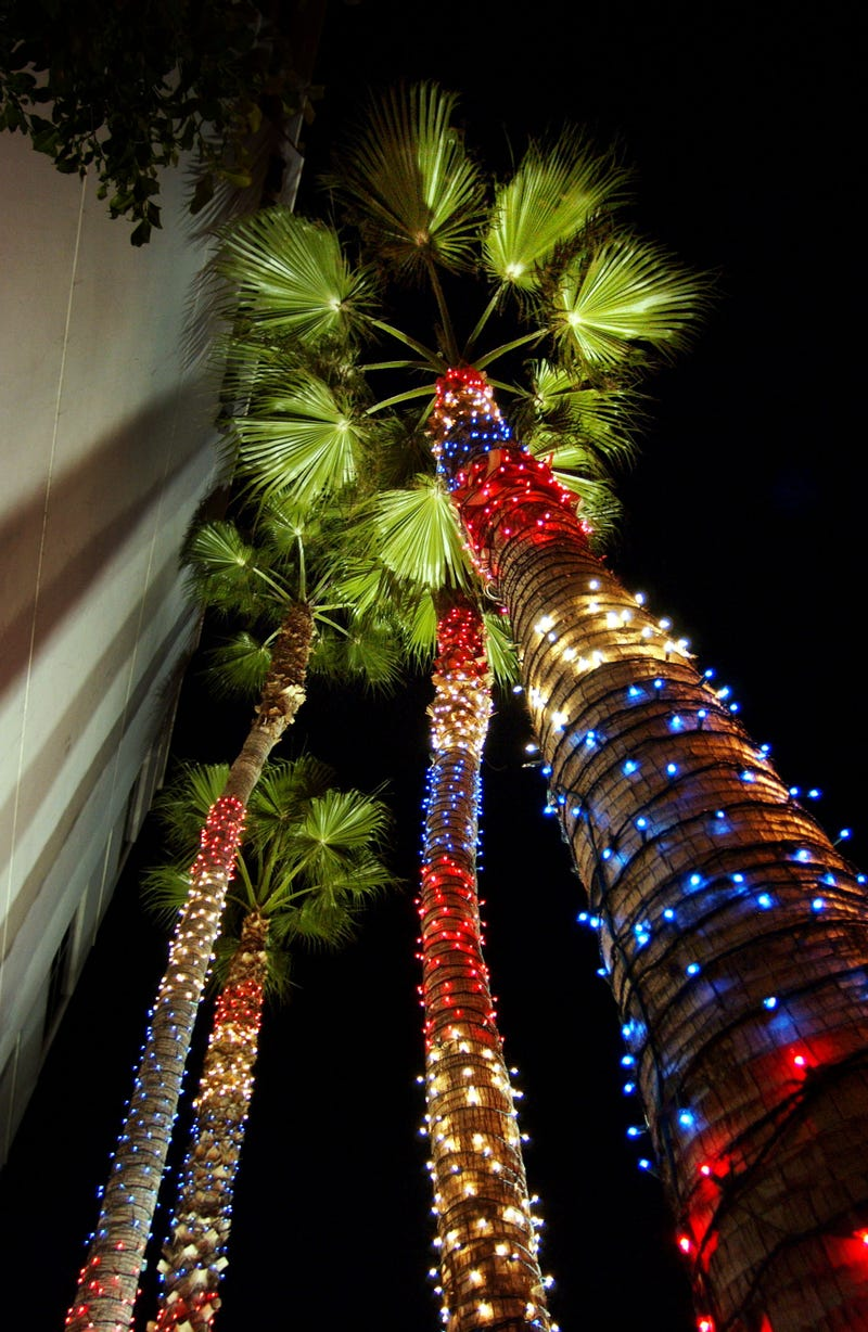 christmas decorated palm trees in california