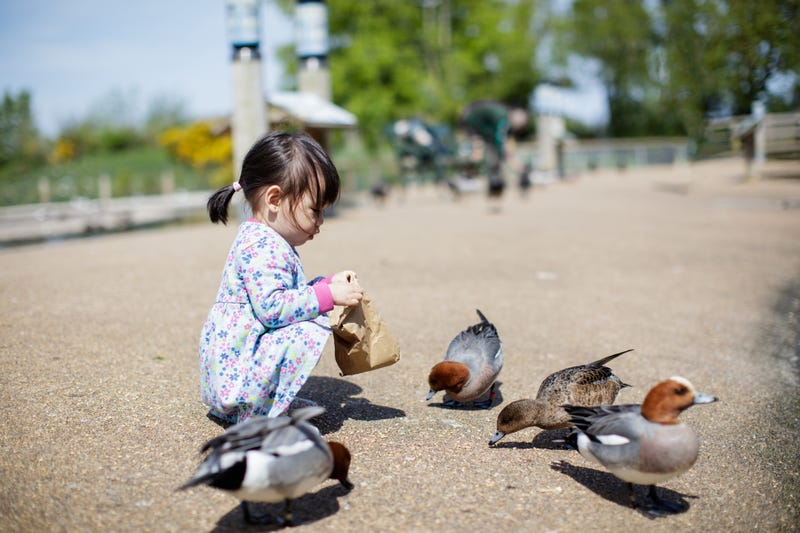 baby girl feeding ducks