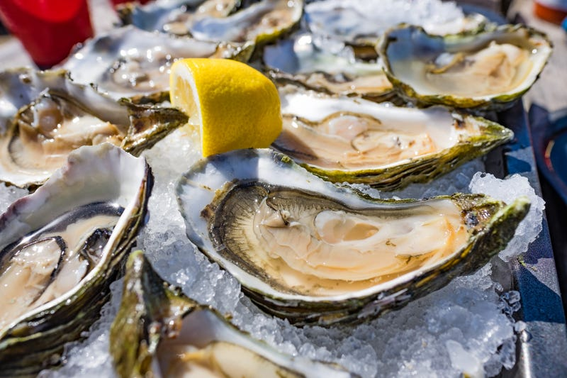 Oysters stock photo.