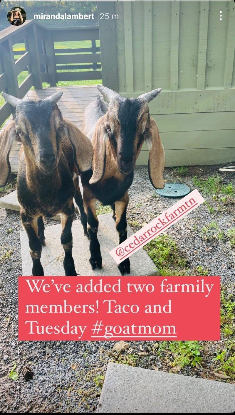 Miranda Lambert Goats