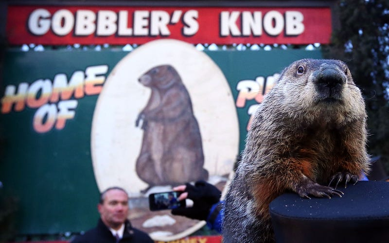 Punxsutawney Phil at Gobbler's Knob on Groundhog Day