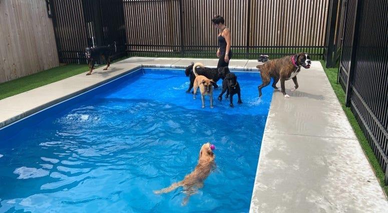 swim club for dogs