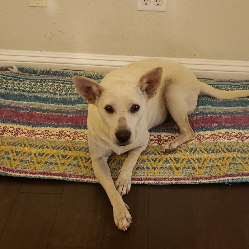 Allie - dog at ARE Animal Rescue in Hemet