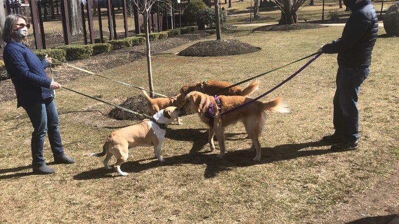 Dog owners li