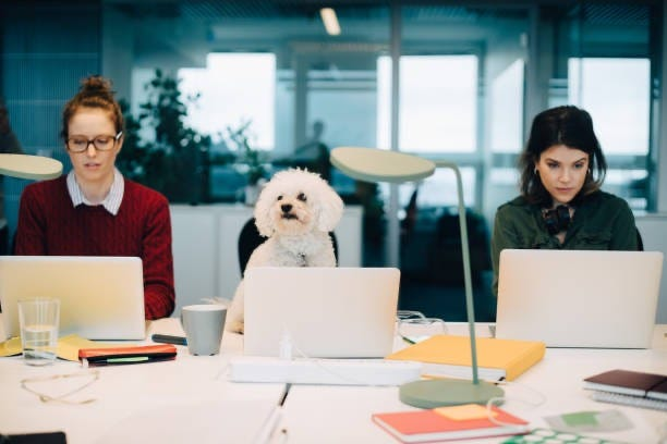 female professionals using laptops with dog between them
