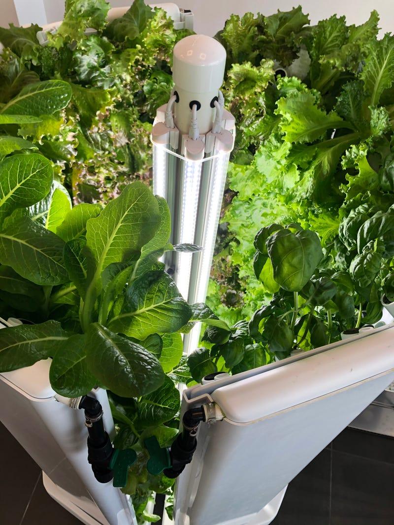 Flex Farm hydroponic system at Operation Food Search