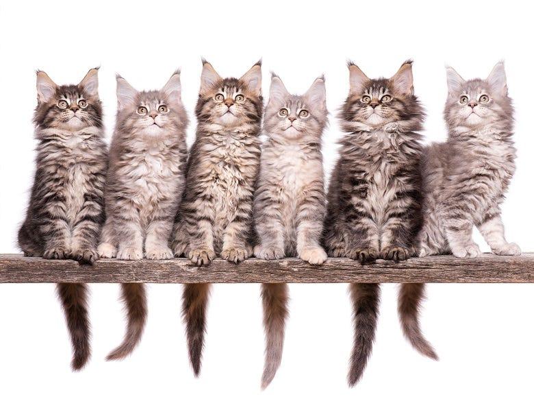 6 kittens