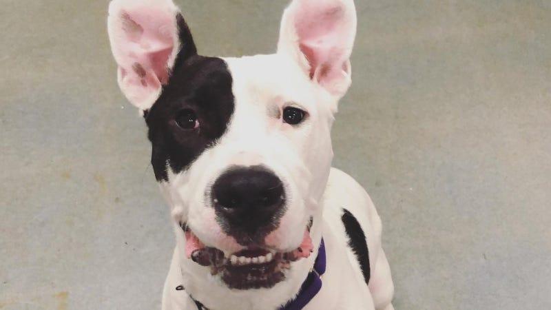 Maisy Austin Humane Society  8/4/21