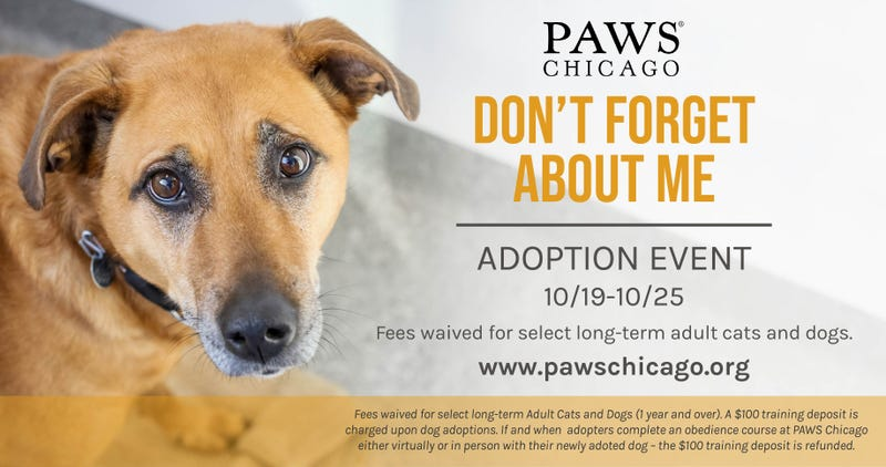 "PAWS Chicago ""Don't Forget About Me"" adoption event"