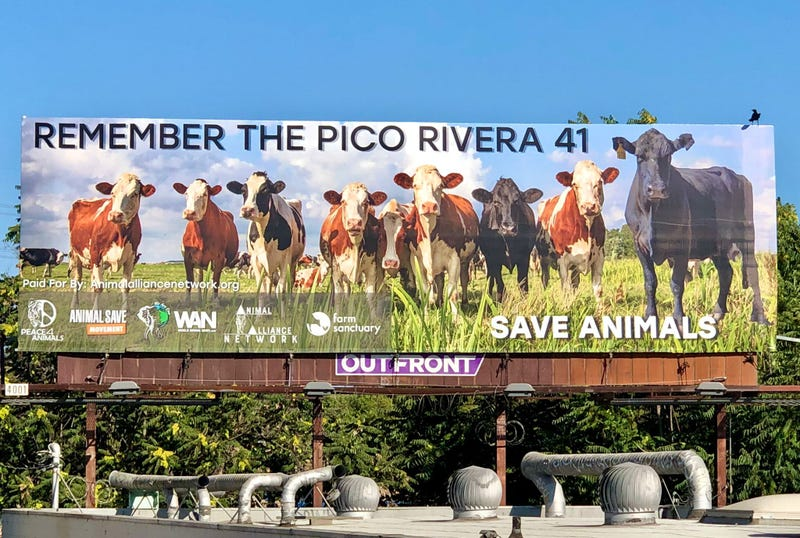 Courtesy Peace 4 Animals