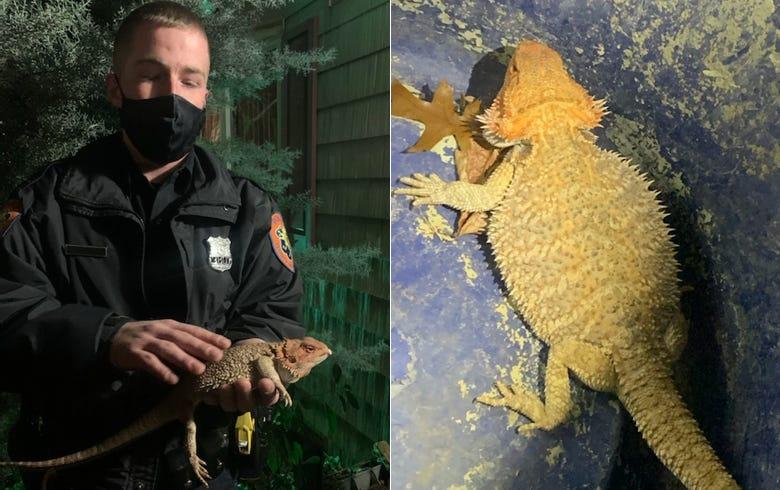 Bearded dragon found on Long Island