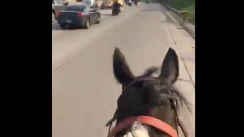 Horse ridden on Dan Ryan was harmed, may need to be put down, prosecutors say