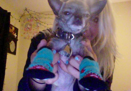 Mollie's dog wearing socks