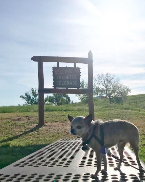 """Mollie's dog in front of the """"Welcome to Colorful Colorado"""" sign"""