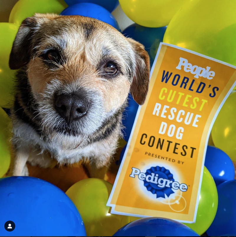 Chicago area pooch named People Magazine's World's Cutest Rescue Dog
