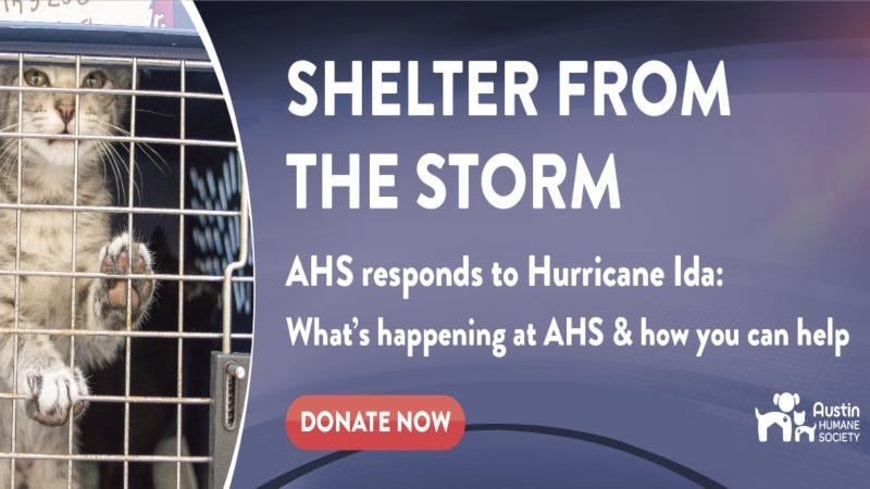 Shelter from the Storm Austin Humane Society