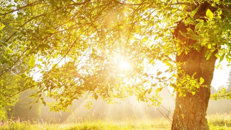 Getty Images Sunshine tree