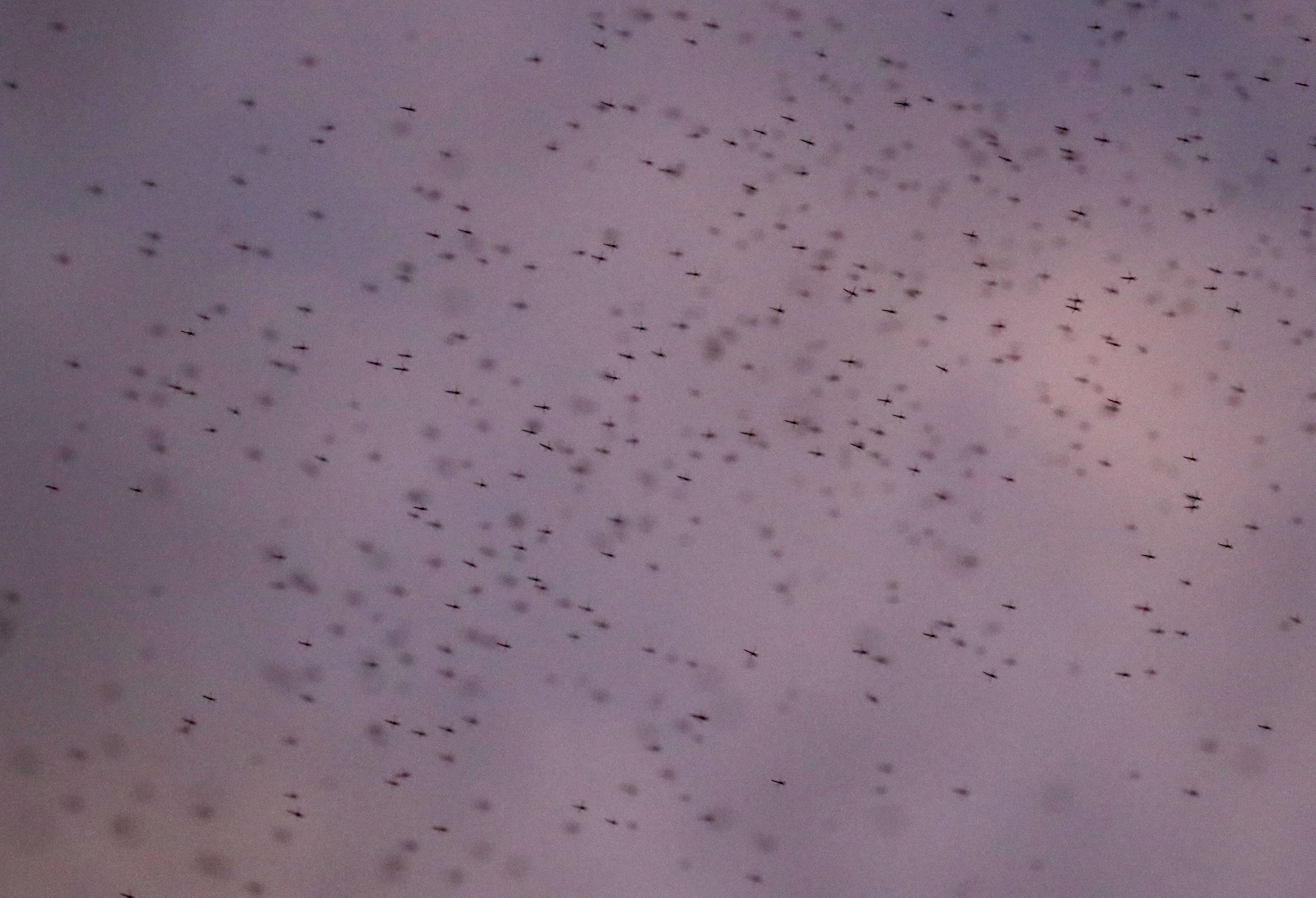 LOOK: Midges are out in full force in Cleveland
