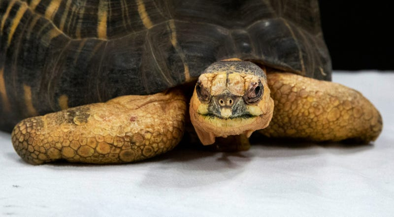 Woman steals tortoise from an Elyria pet shop.