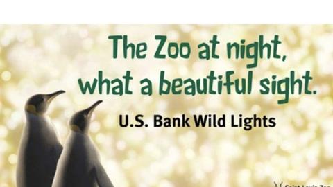 U.S. Bank Wild Lights