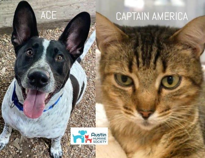Ace & Captain America @ Austin Humane Society May 2020
