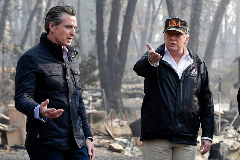 Trump Forest Fuels