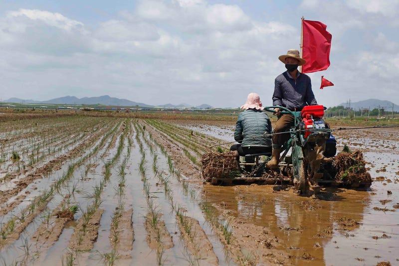 North Korea Food Shortage