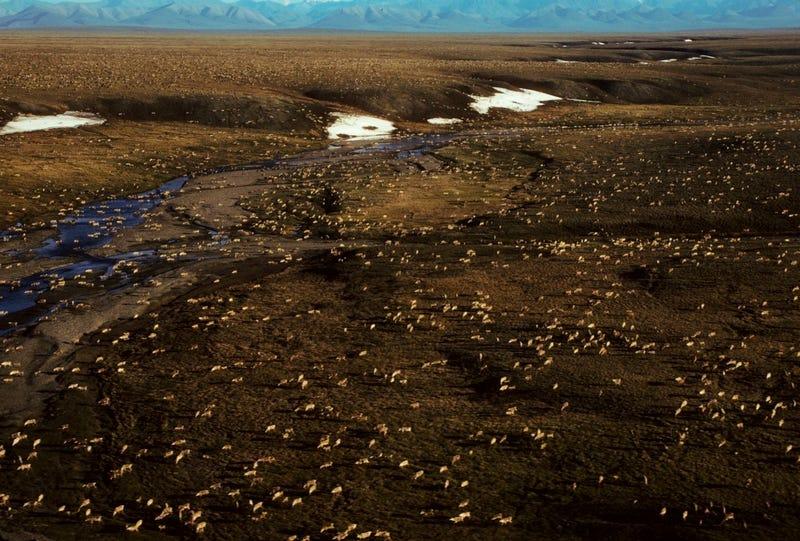 Arctic Refuge Drilling