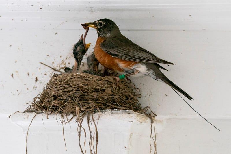 Bird Migration Space Station