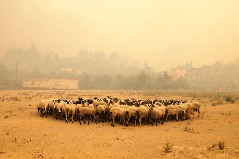 APTOPIX Greece Wildfires
