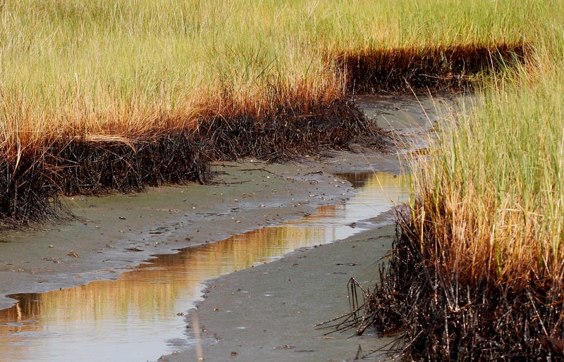 BP Spill Coastal Restoration
