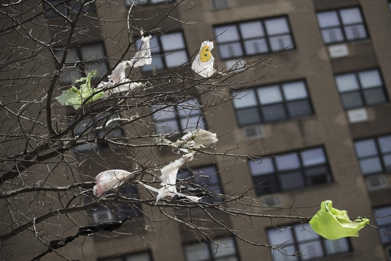Plastic bags stuck in trees