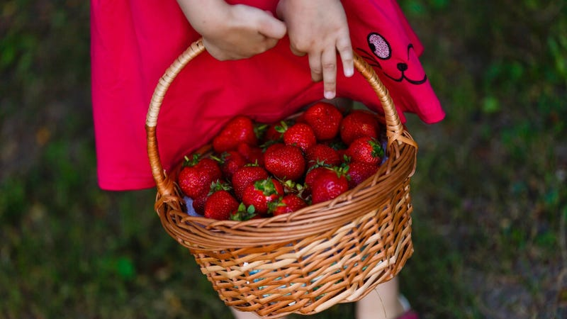 Child with a basket of berries
