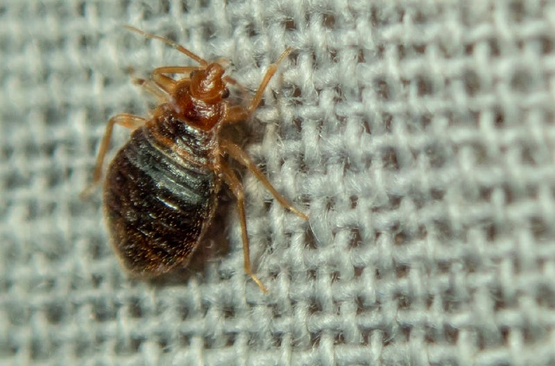 woman sets herself on fire trying to kill bedbugs