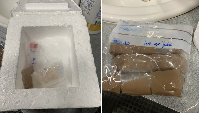 Traveler caught with undeclared biological materials at Detroit Metro Airport
