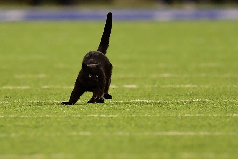 EAST RUTHERFORD, NEW JERSEY - NOVEMBER 04: A black cat runs on the field during the second quarter of the New York Giants and Dallas Cowboys game at MetLife Stadium on November 04, 2019 in East Rutherford, New Jersey.