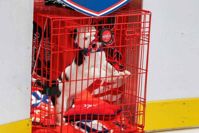 Caps Puppy Playoffs