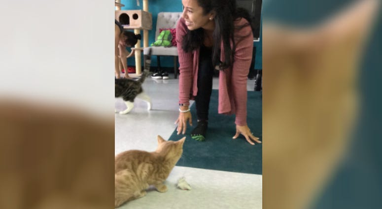 "People and cats taking part in a ""cat yoga"" class in Delaware County"