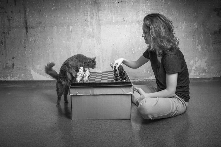 Chess with a cat