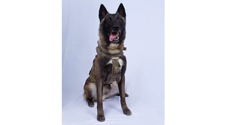 Conan, the dog injured in the operation to get al-Baghdadi