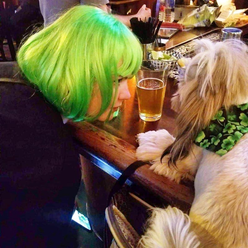 Dog in a bar St. Patrick's weekend