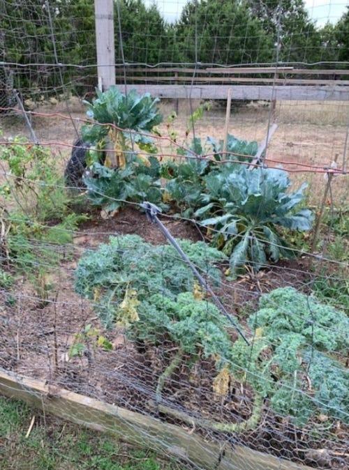 Darci's home garden