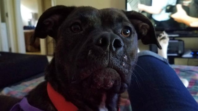 dog stolen in Kentucky turns up in Michigan