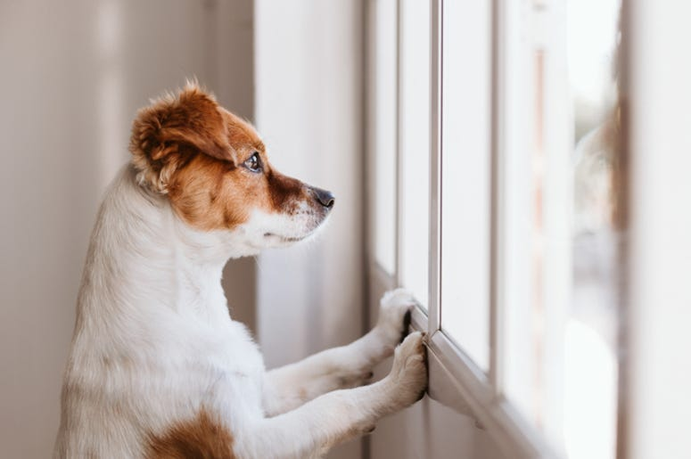 Dog_At_Window