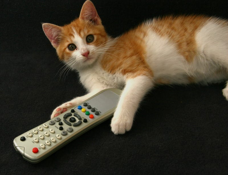 Cat with remote control