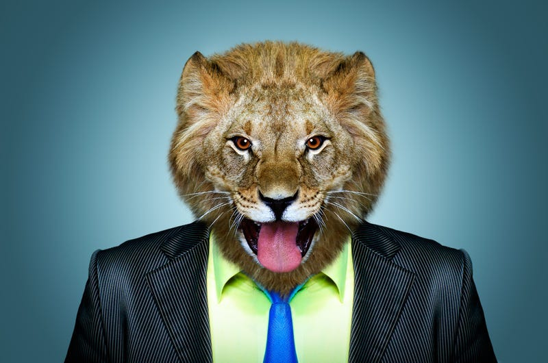 Portrait of a lion in a business suit.