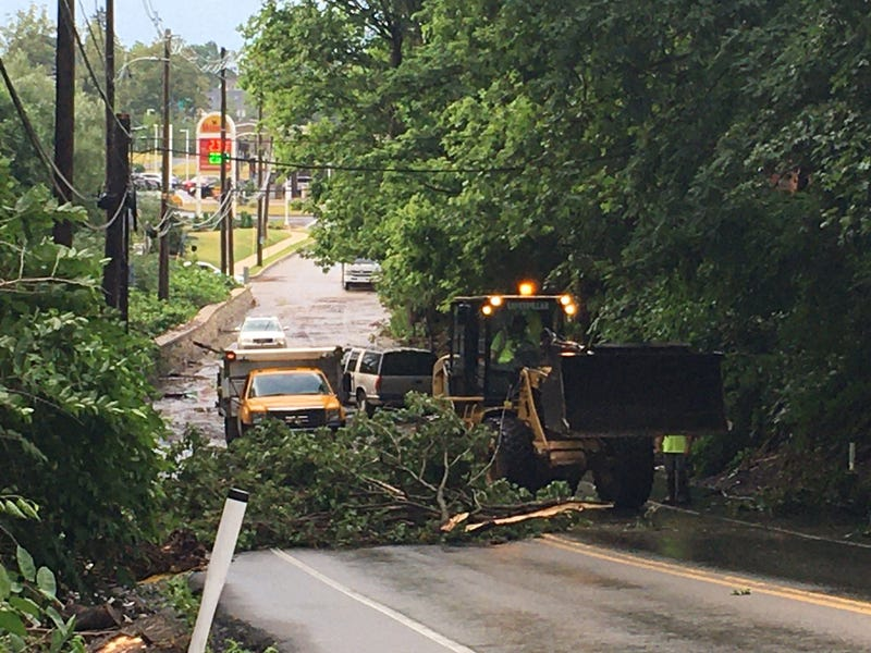 A downed tree on Limekiln Pike and Clubhouse Lane where flash flooding hit