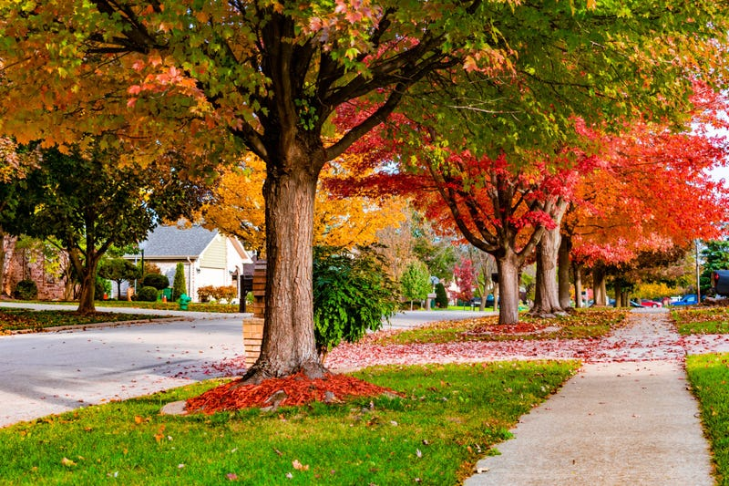 Neighborhood street with Fall colored trees